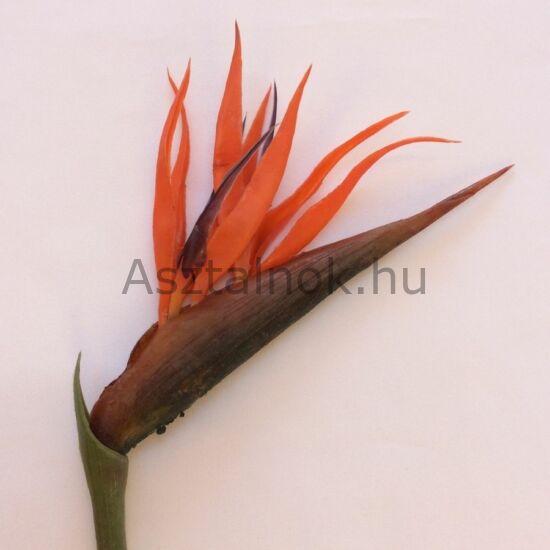 Papagájvirág dekoráció